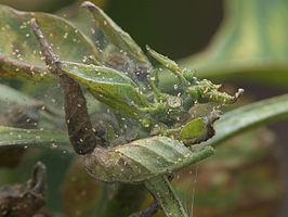 Fabelhaft Krankheiten und Schädlinge - #SQ_67